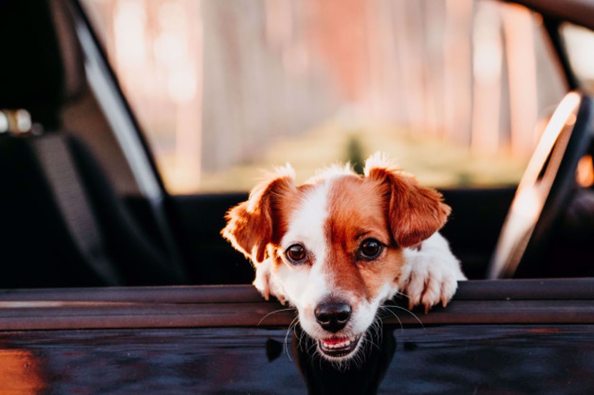 Sharing the Car Love With Your Furry Friend!