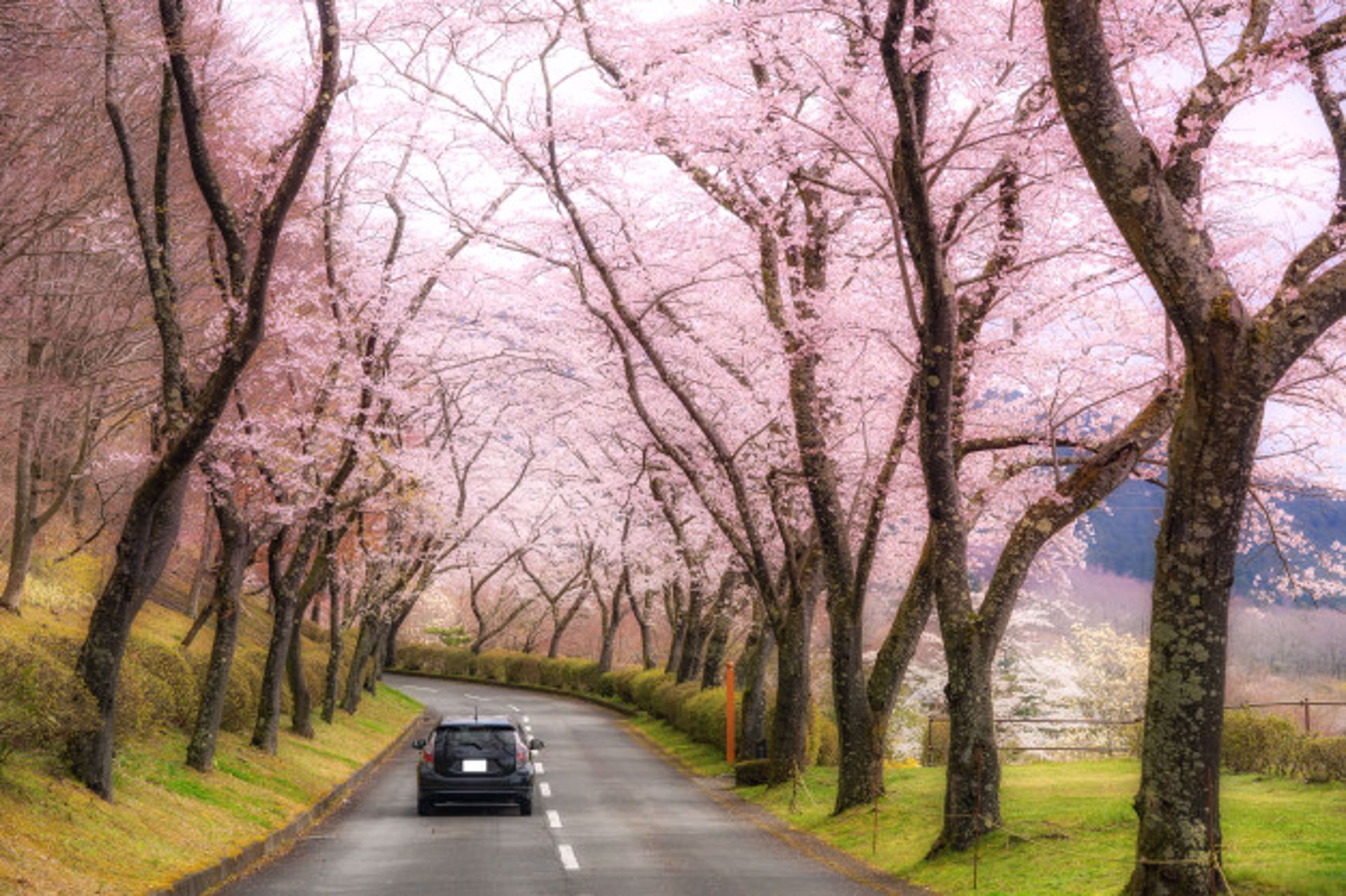 5 Reasons Why April is the Right Time to Buy a Car